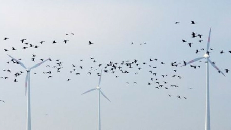 A two-year study suggests bird collisions with offshore wind turbines are less frequent that thought