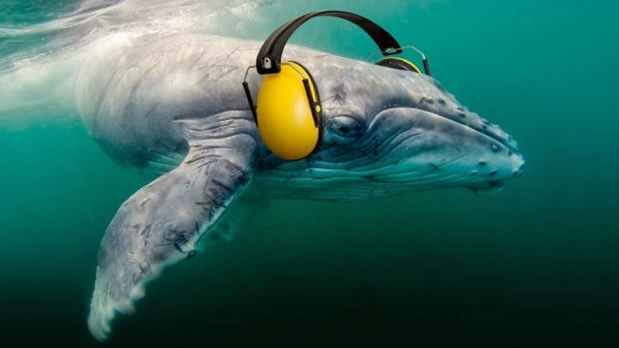 X Publicity material for Vancouver's whale protection programmes provides a quirky take on noise red