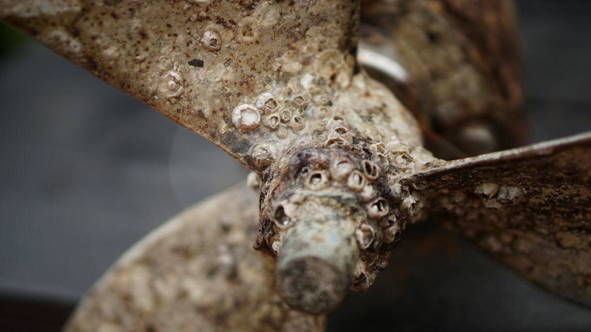 Foul play: extreme biofouling increases surface roughness – and the fuel bill